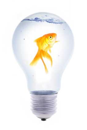 goldfisch-ii.jpg
