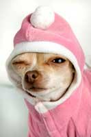 Witziger Hund mit Zwinkerauge