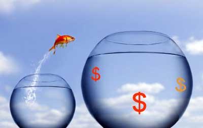 Goldfisch in Abhängigkeit