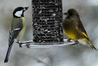 csn blog gartenv gel ben tigen unsere hilfe und das richtige vogelfutter. Black Bedroom Furniture Sets. Home Design Ideas