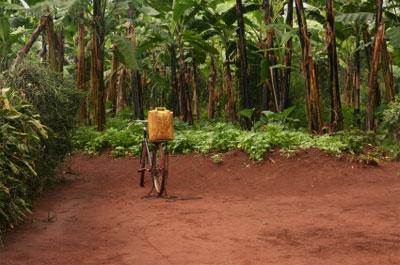 Toxisches Paradies: Karibikinseln durch Pestizide verseucht