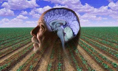 Pestizide verstärken das Risiko an Parkinson zu erkranken