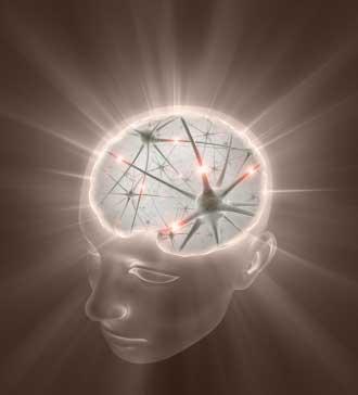 Gehirn Neuronen