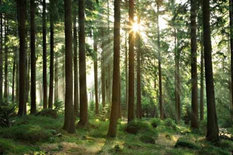 Gedicht: Im Wald
