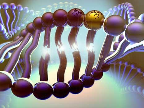 Genvarianten werden bei fast allen MCS Patienten gefunden
